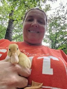 Clemson duck