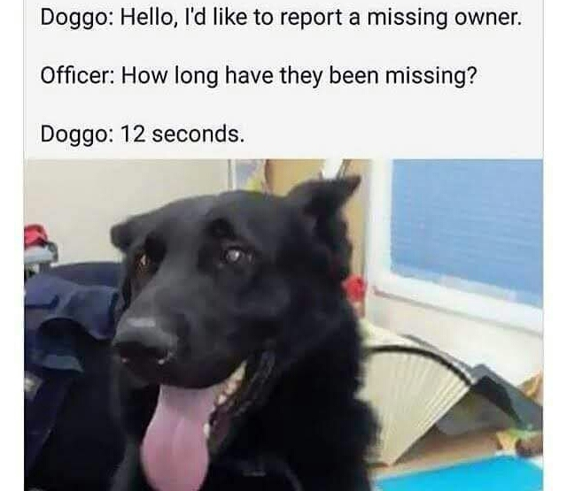 Memes Dogs missing owners after 12 seconds