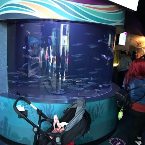 . Silver fish ripley's Aquarium Myrtle Beach south carolina