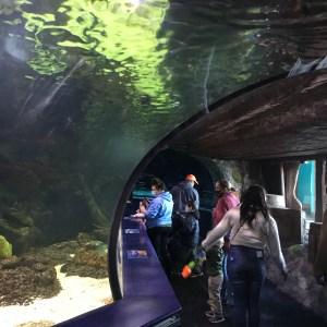 Aquarium tunnel Myrtle Beach South Carolina Ripleys aquarium