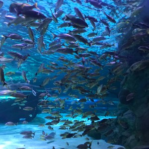 School of fish Ripleys aquarium Myrtle Beach South Carolina