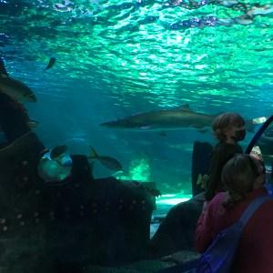 Large sharks Ripleys aquarium Myrtle Beach South Carolina