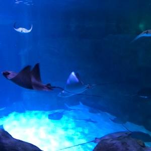 Ripley's Aquarium Myrtle Beach south carolina stingrays