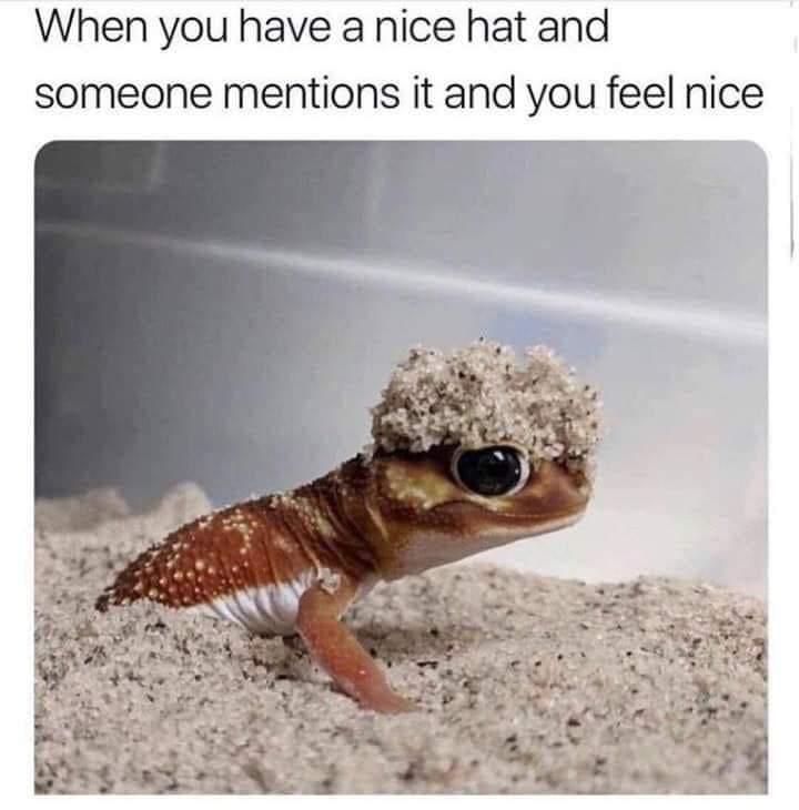 Memes Having a nice hat