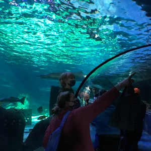 Glass tunnel Ripleys aquarium Myrtle Beach South Carolina