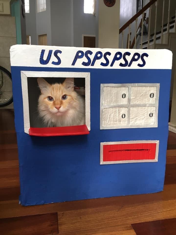 Memes Cat post office