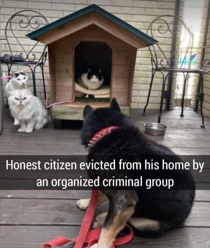 Memes Cats Evec dog from dog house