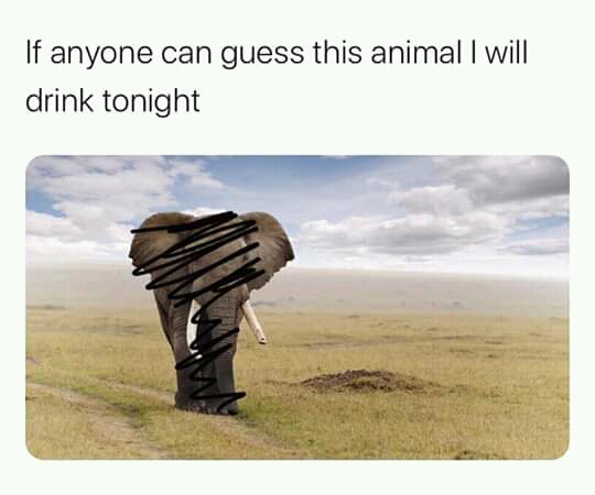 Guess the Animal meme African elephant