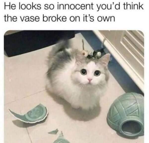 Memes Cat breaking vase