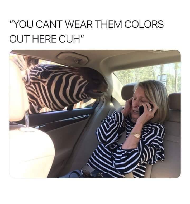 Memes Zebra print
