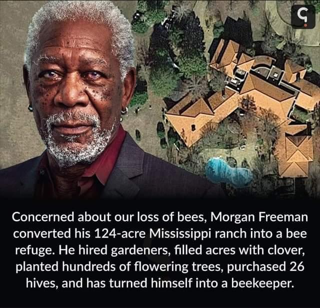 Memes Morgan Freeman beekeeper