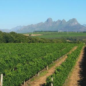 Stellenbosch winery South Africa