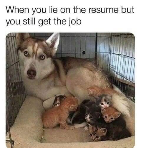 Memes Husky mother adopting kittens