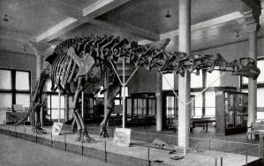 Brontosaurus fossil museum