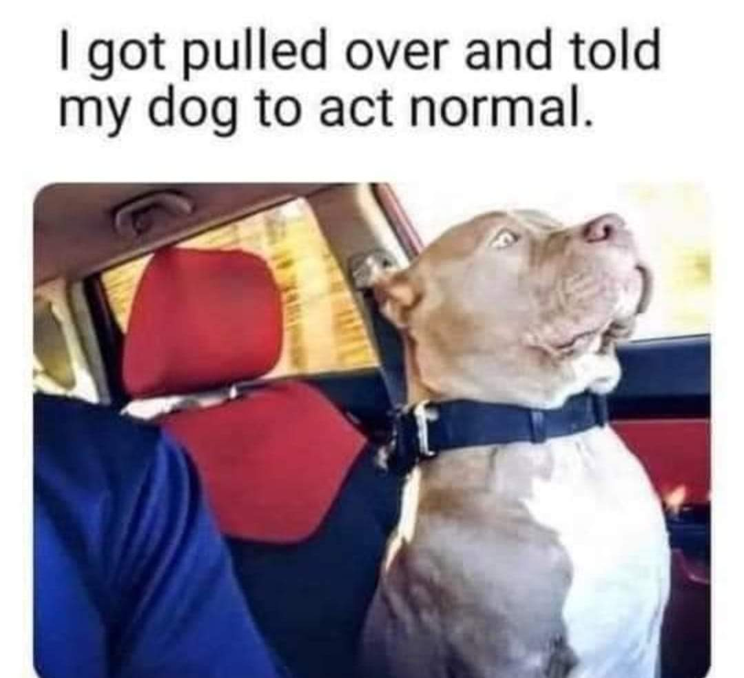 Memes Telling your dog to act normal