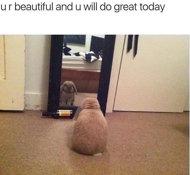Memes Cute bunny
