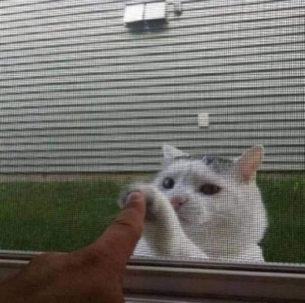 Memes Outdoor cat