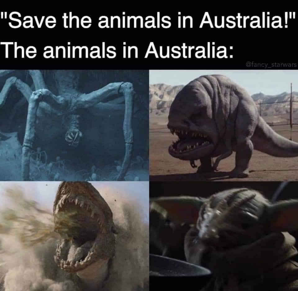 Memes Animals in Australia