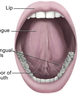 The human mouth