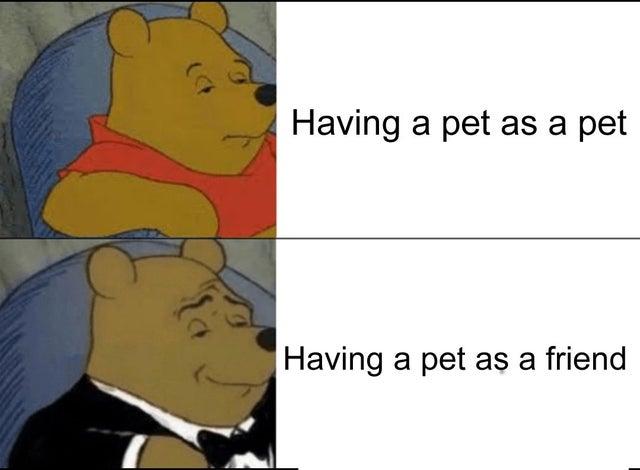 Memes Having a pet as a friend