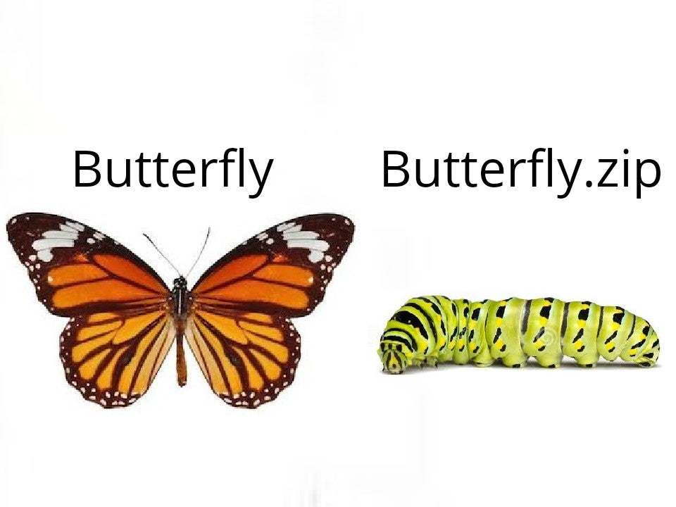 Memes Butterfly