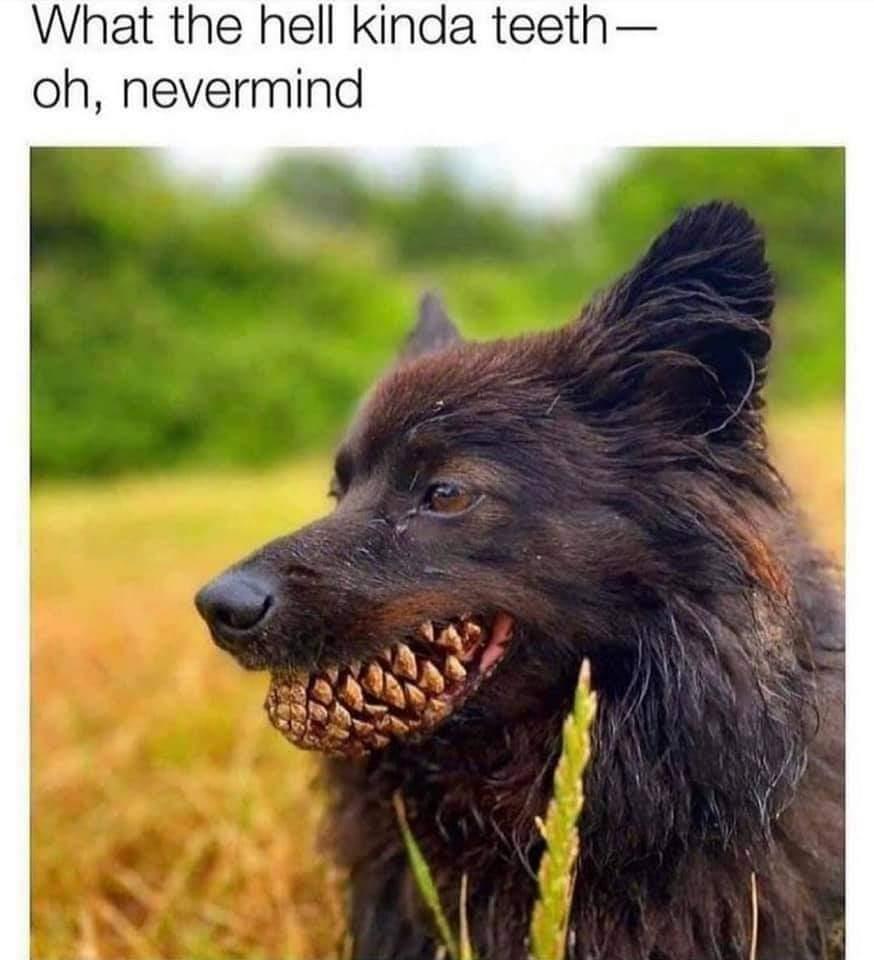 Memes Scary dog teeth