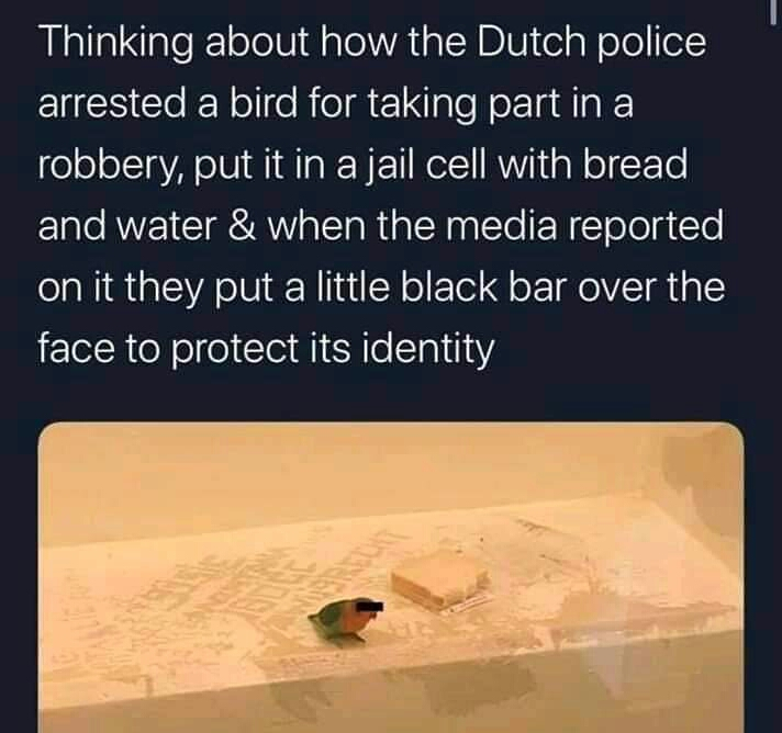 Memes Bird arrested for robbery the Netherlands Dutch police