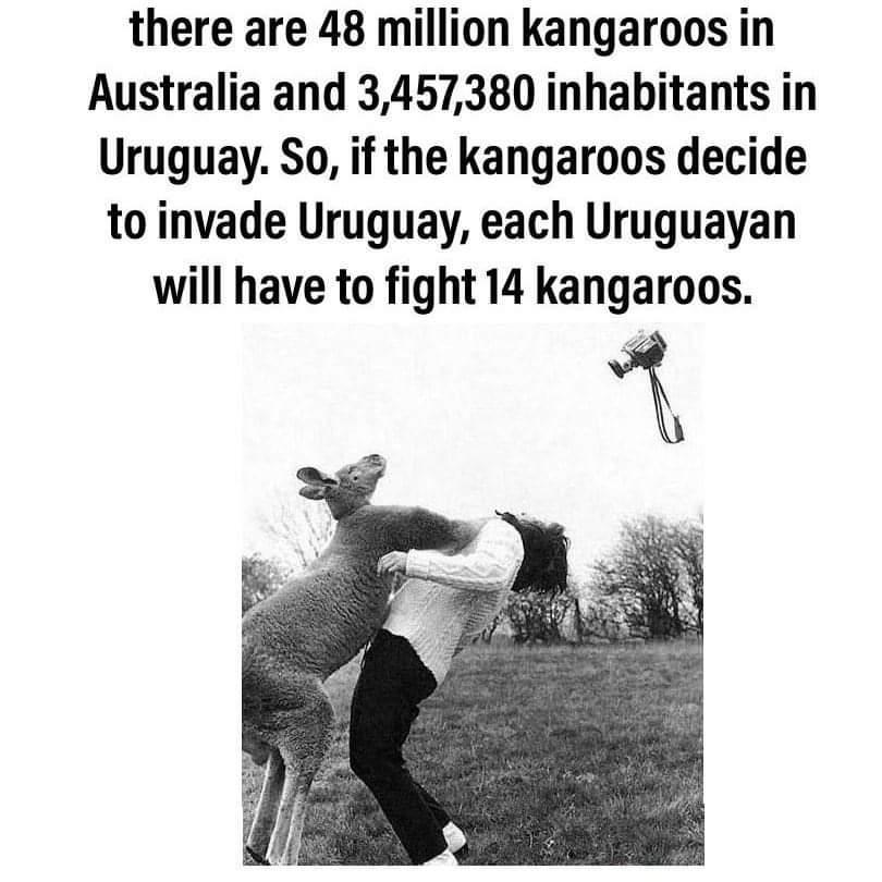 Memes Army of kangaroos