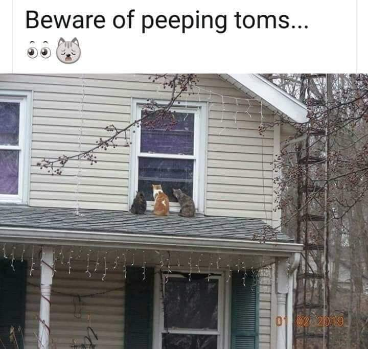 Memes Cats on house roof