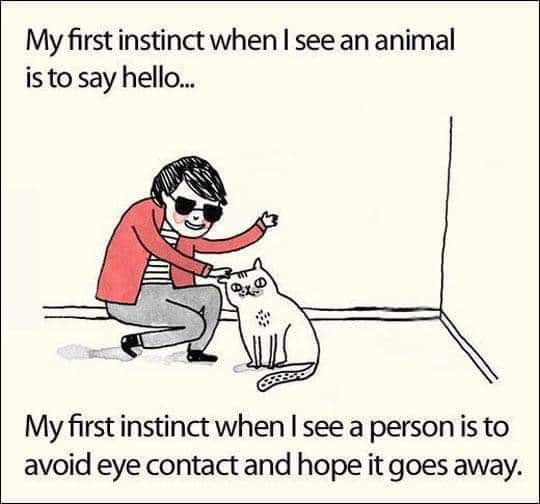 Memes Introvert meme people versus animals