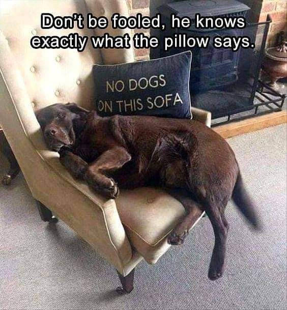 Memes No dogs on the sofa