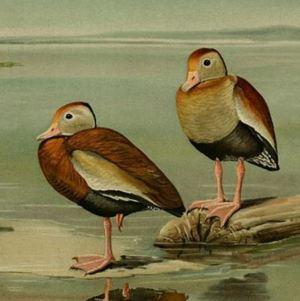 Artwork of ducks
