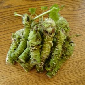 Wasabi horseradish Japan