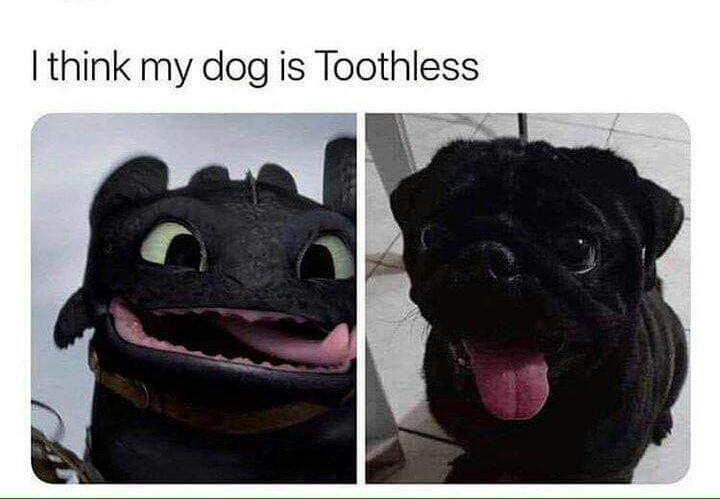 Memes How to train your Dragon toothless dog