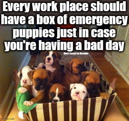 Memes Workplace puppies