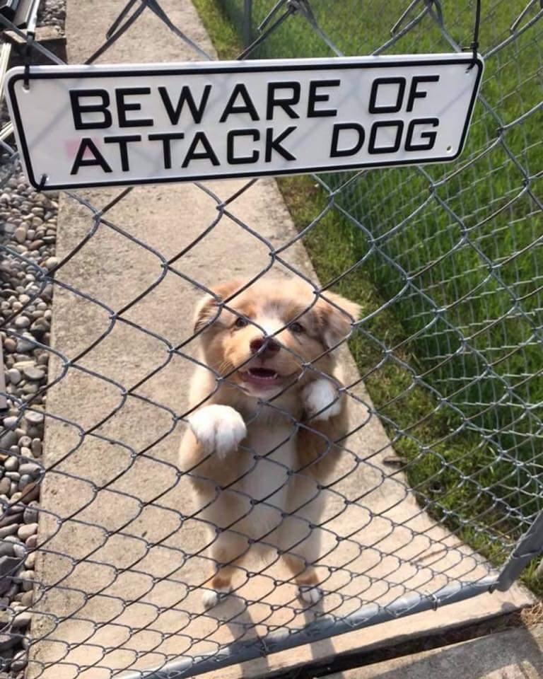 Memes Beware of attack dog