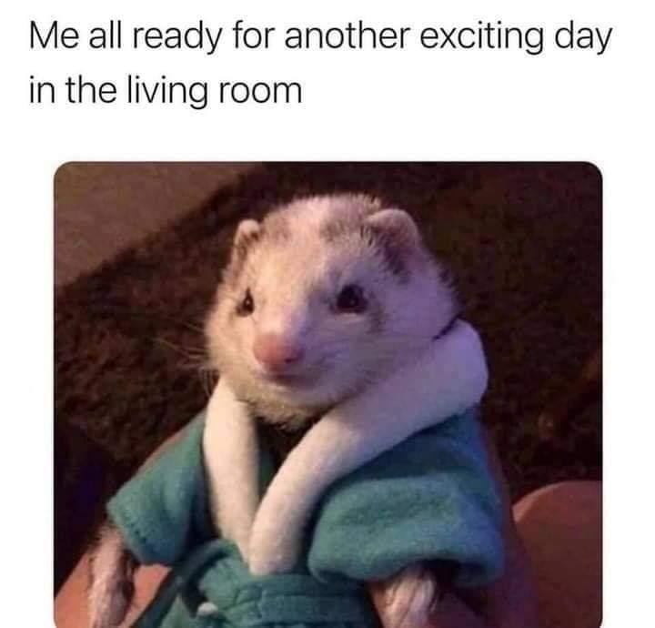Memes Ferret bathrobe