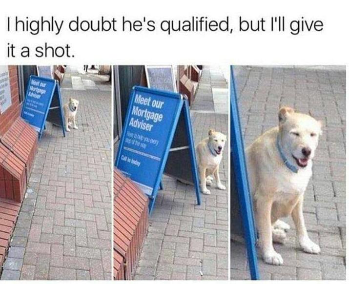 Memes Dog mortgage advisor