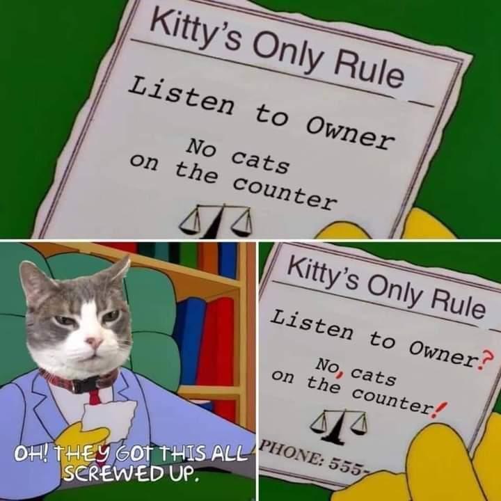 Memes Lionel huts parody the Simpsons house cat