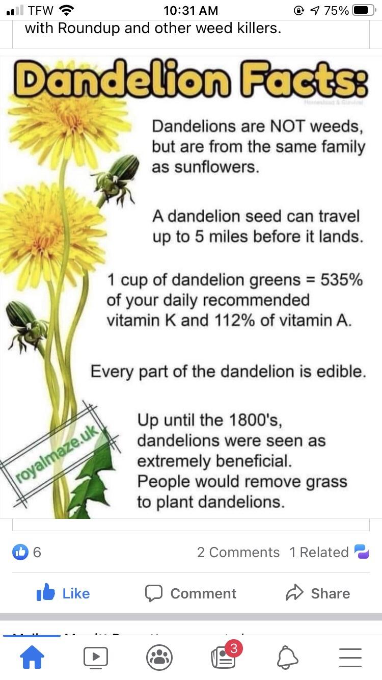 Memes Facts about dandelions