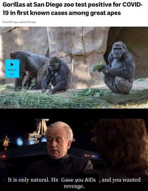 Memes Gorillas versus humans COVID-19
