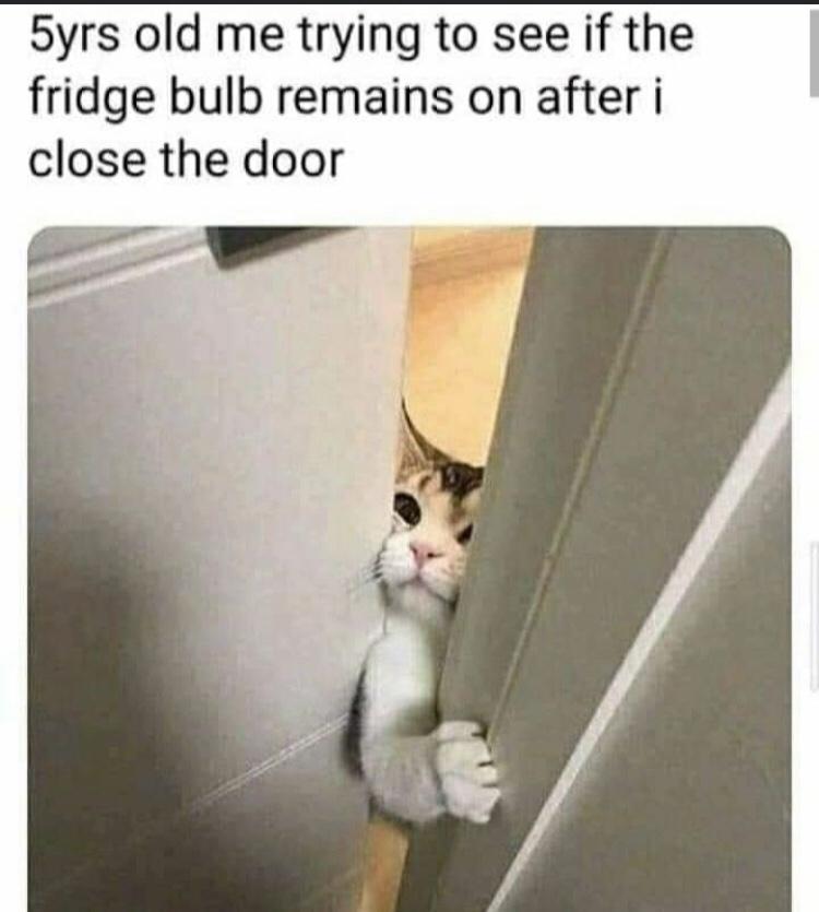 Memes Light bulb in the refrigerator