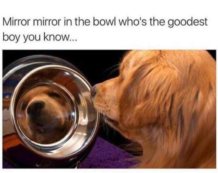 Memes Dog looking to bowl mirror mirror on the wall