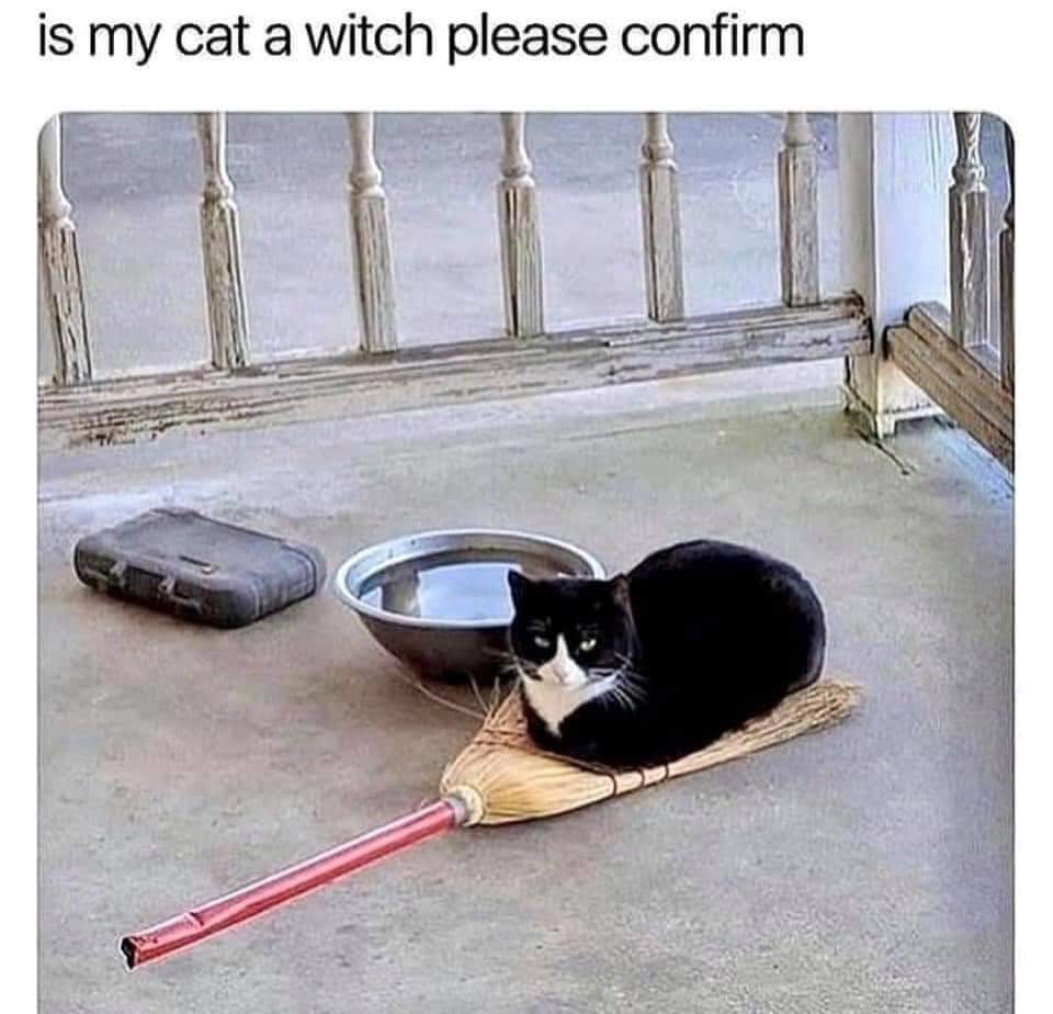 Memes The cat is a witch