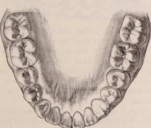 Drawing of human teeth Jaw