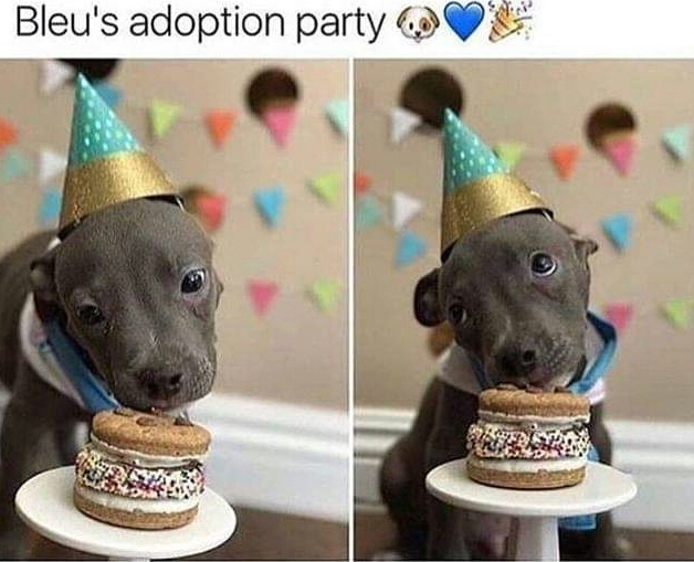 Memes Dogs adoption party