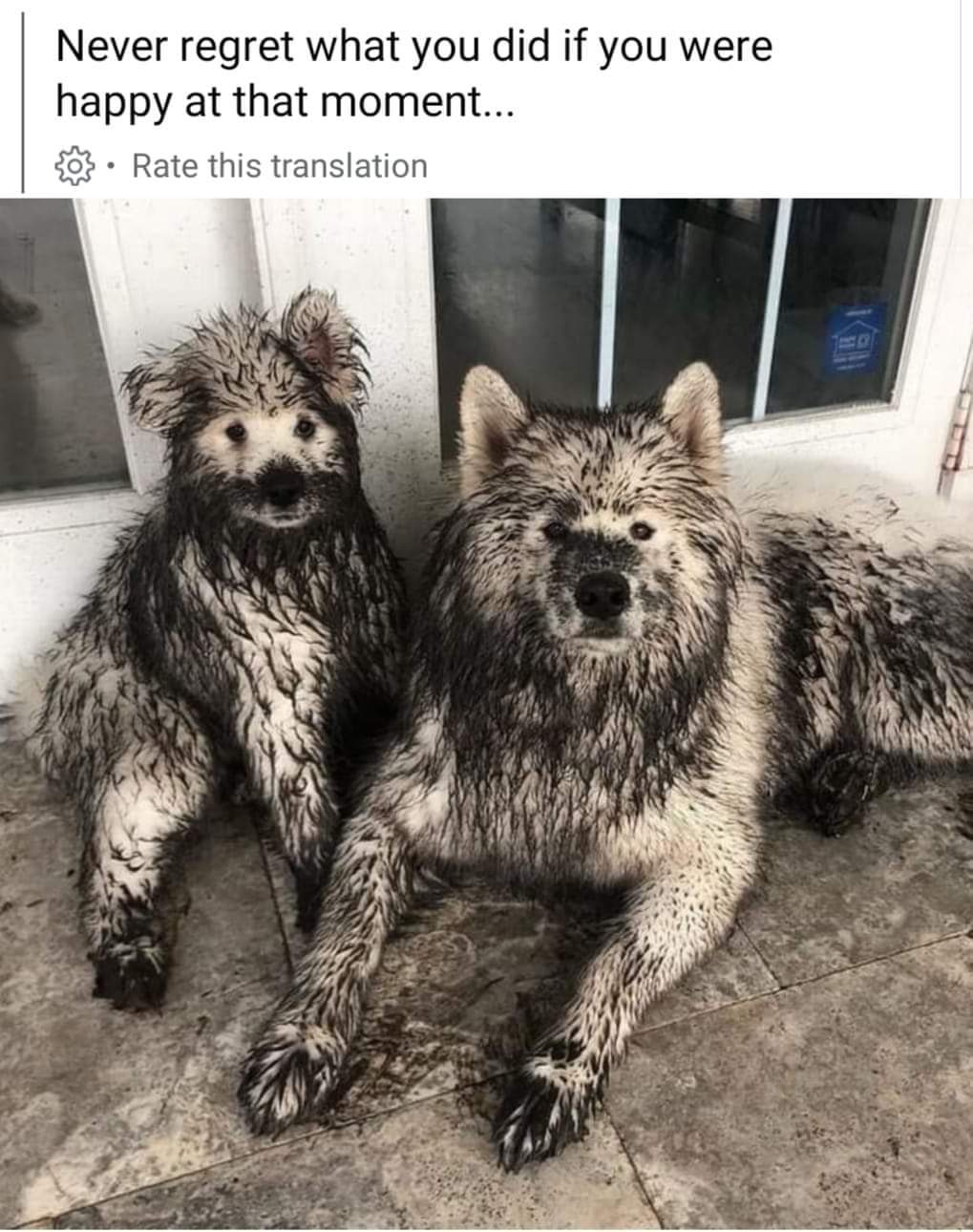 Memes Dogs with dirt all over them