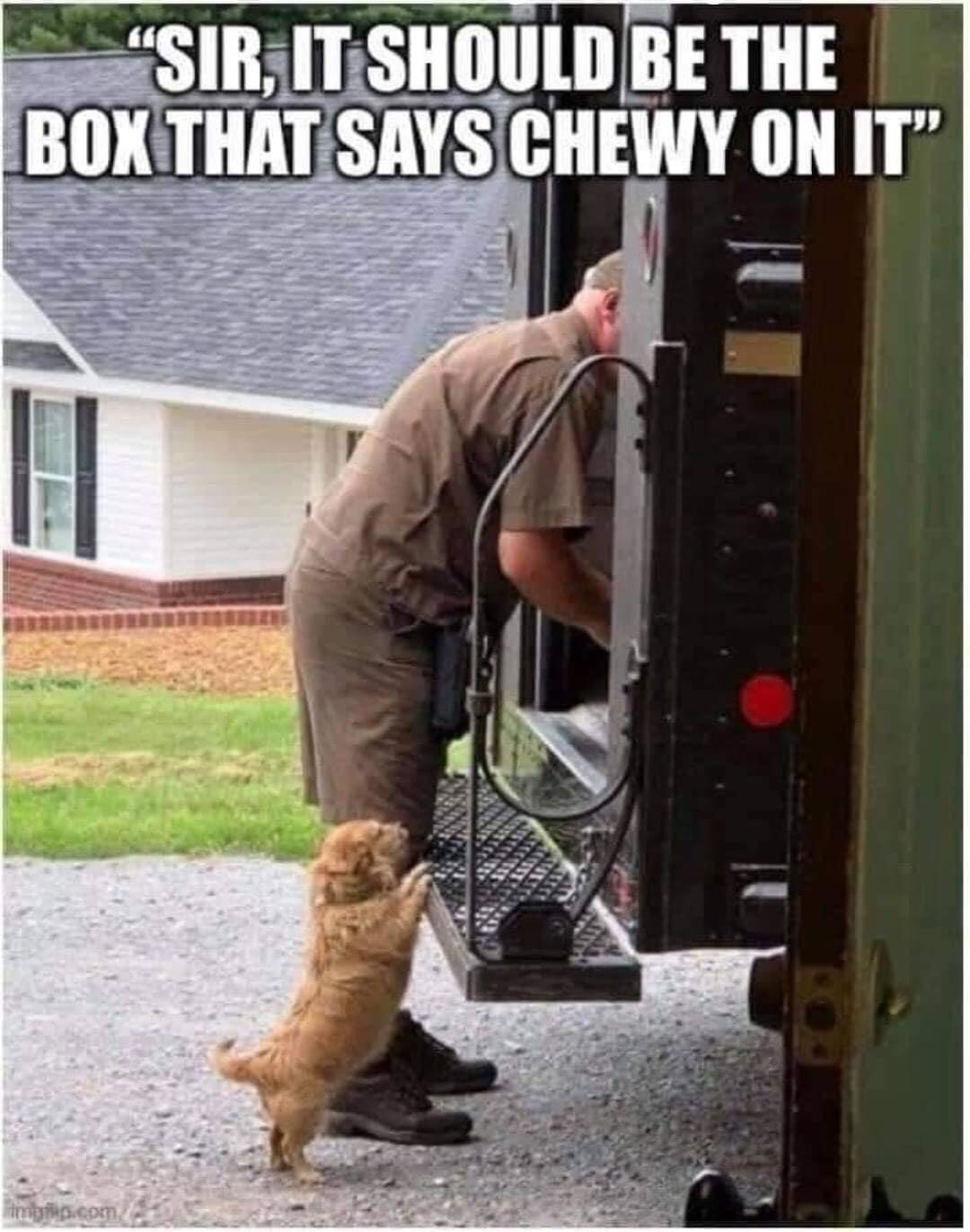 Memes Dog asking UPS man for chewy box