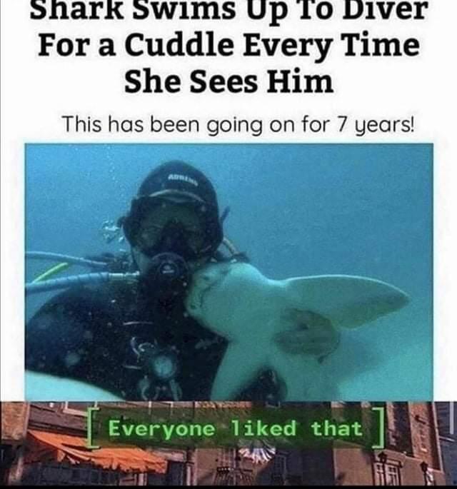 Memes Shark hugs scuba diver