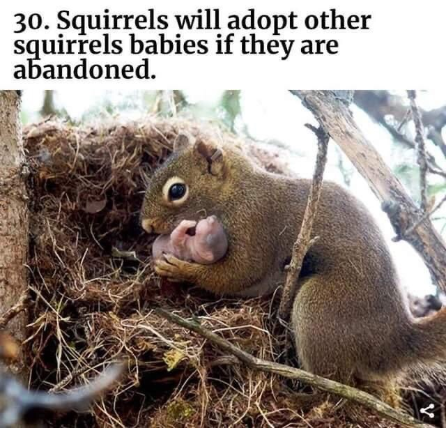 Memes Squirrels adopting baby squirrels